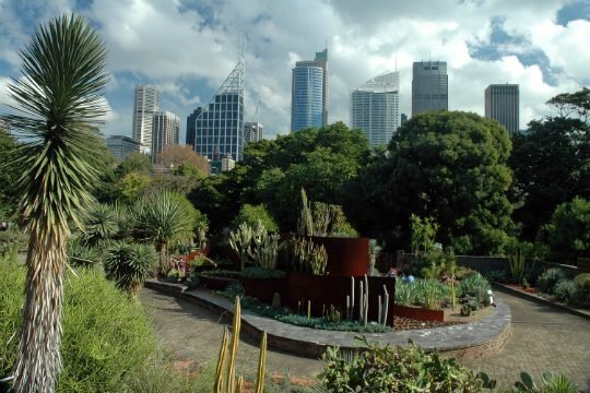 royal-botanic gardens sydney