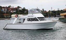 medium sized white catamaran